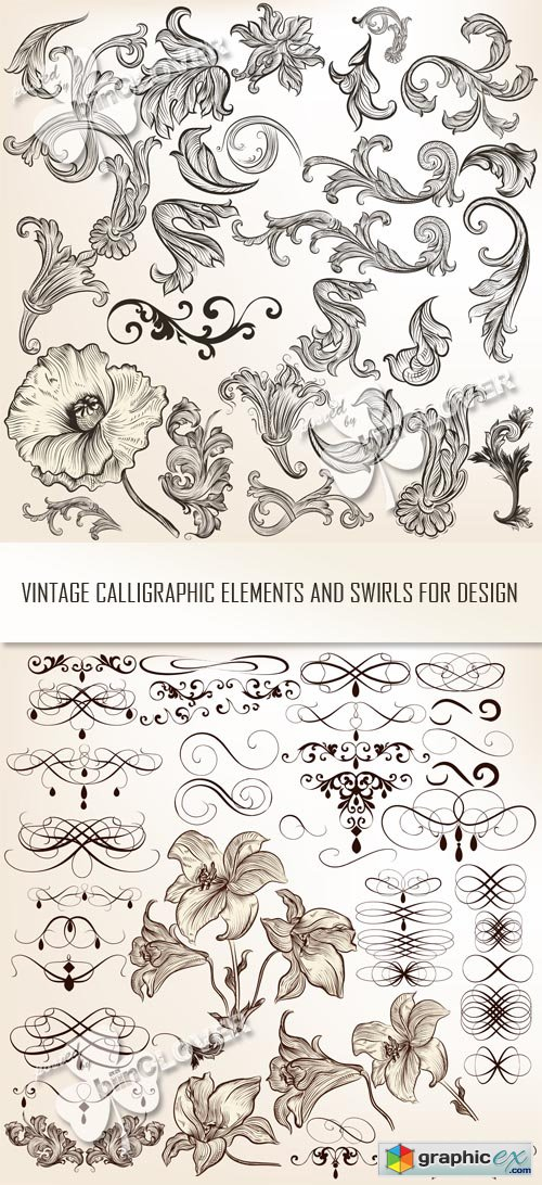 Vector Vintage calligraphic elements and swirls for design 0513