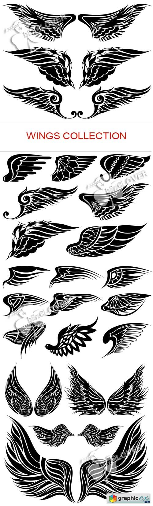 Vector Wings collection 0485