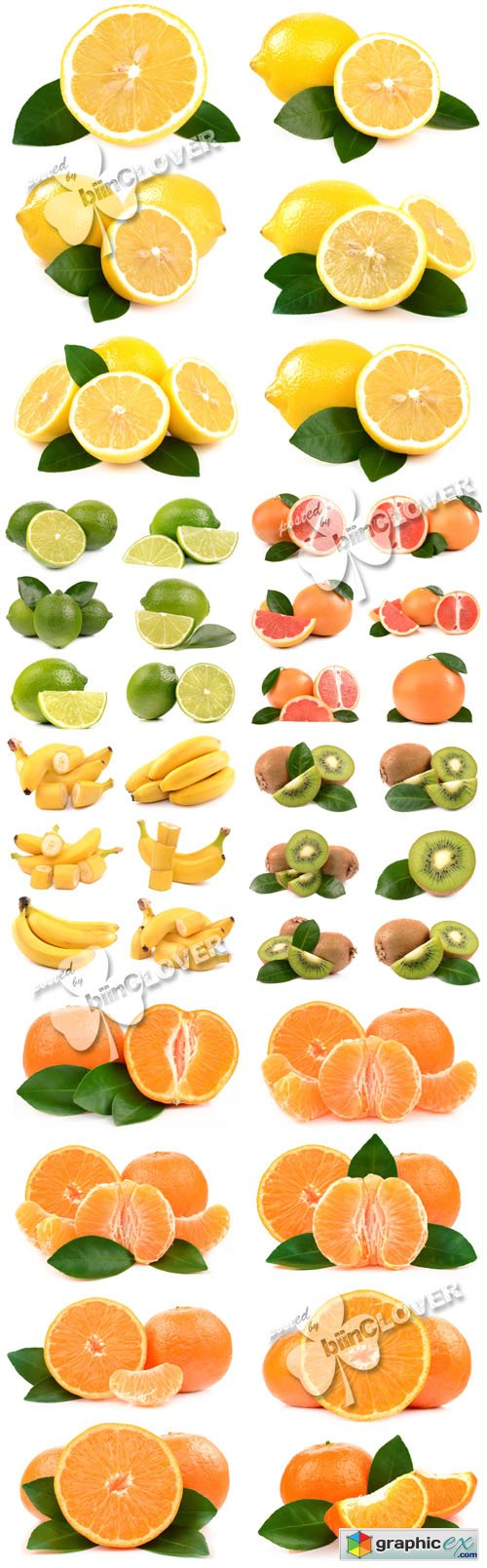 Fruits and citrus 0440
