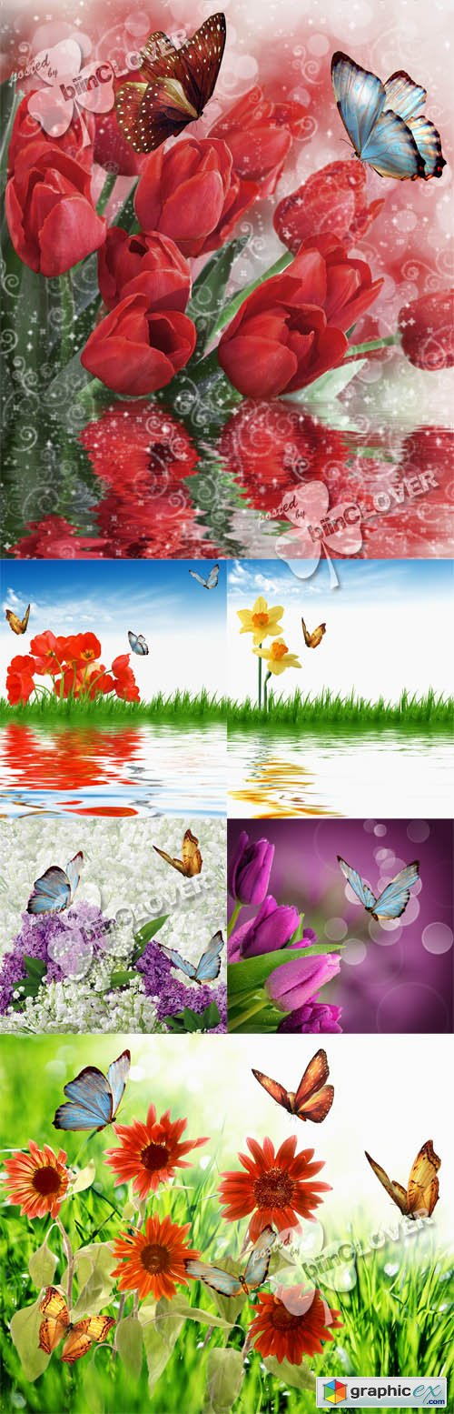 Vector Flowers and butterflies 0431