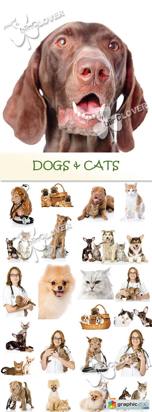 Dogs and cats 0559