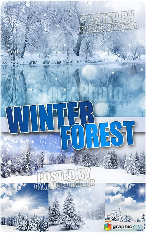 Winter forest - UHQ Stock Photo