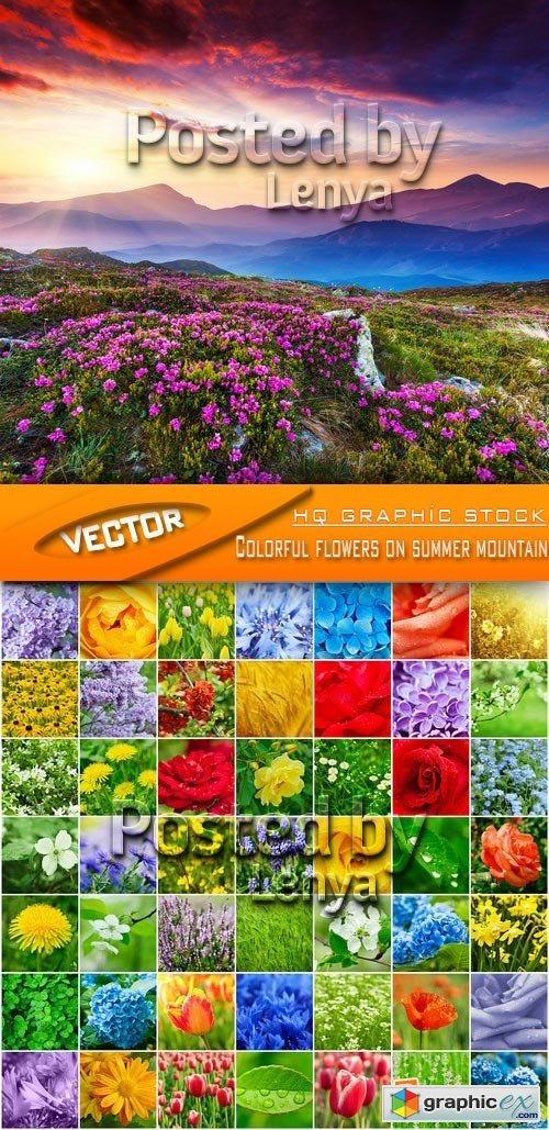 Stock Photo - Colorful flowers on summer mountain