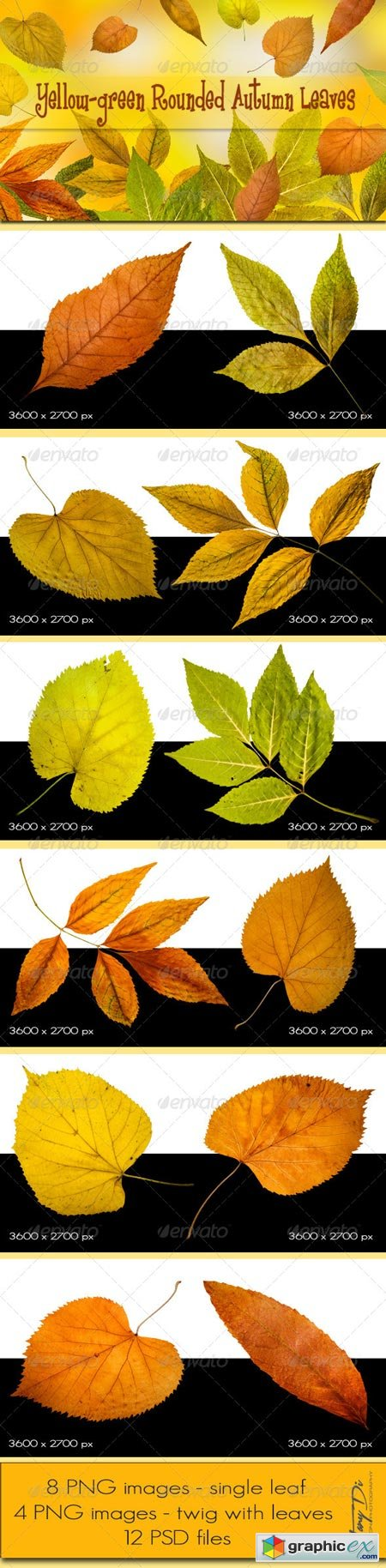 Yellow-green Rounded Autumn Leaves 5776176