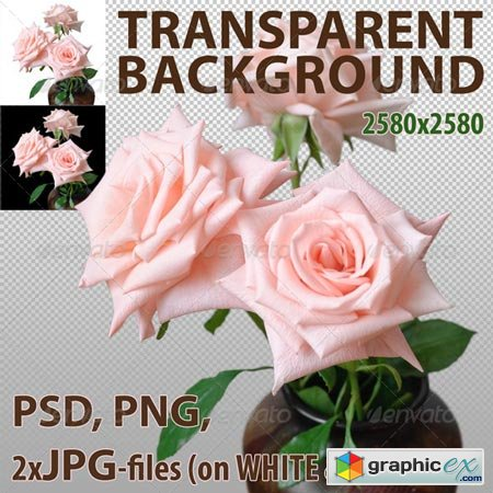 Pink Roses Isolated 5422638