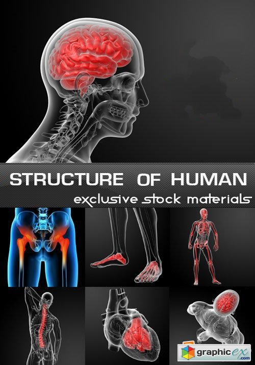Structure of Human, 25 JPEG