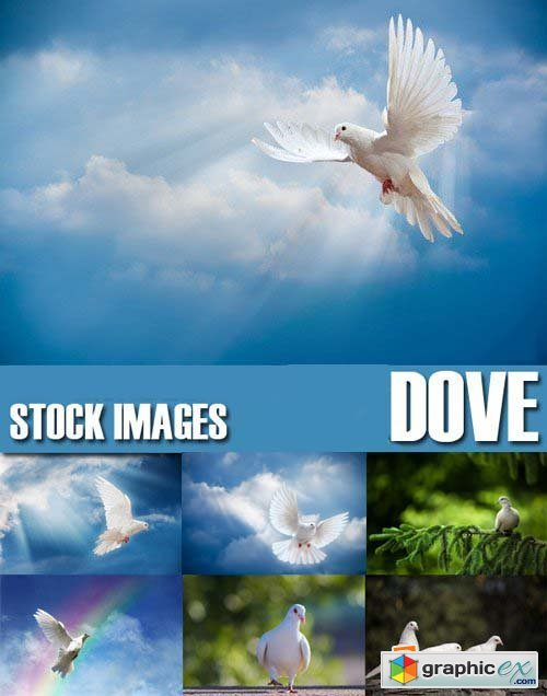 Stock Photos - Dove, Pigeon, 25xJPG