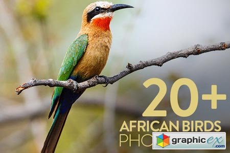 African Birds Photo Pack (20+) 43863