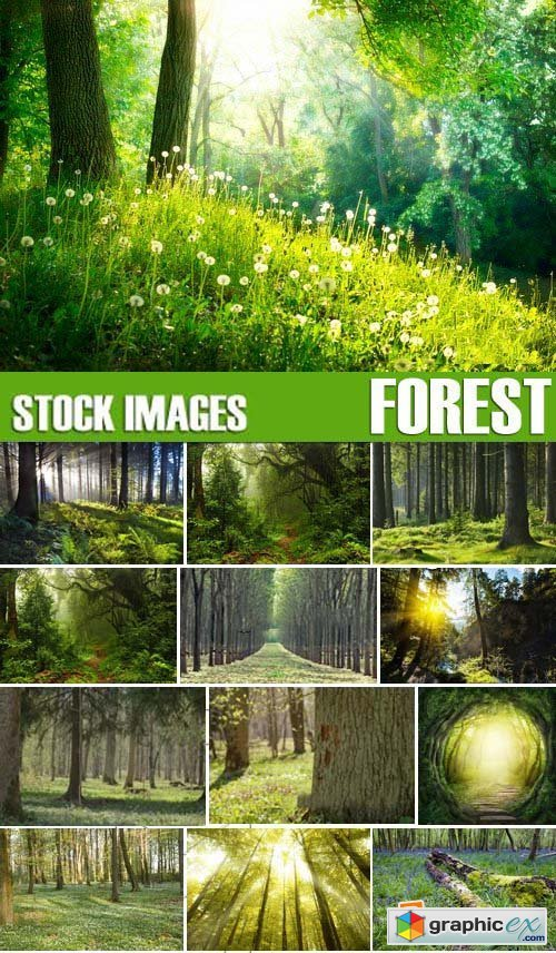Stock Photos - Forest, 25xJPG