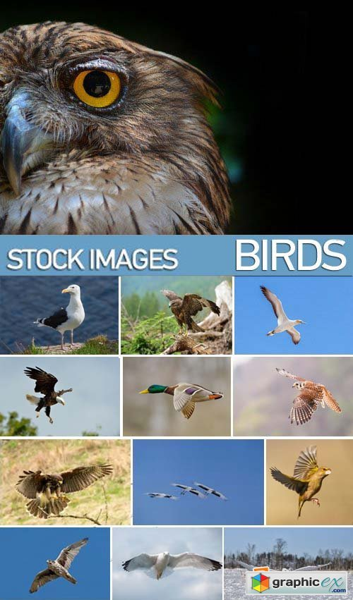 Stock Photos - Birds flying, 25xJPG