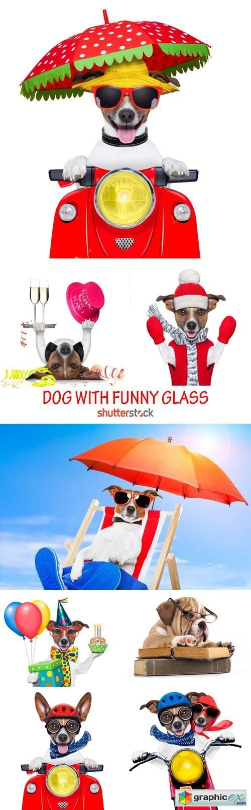 Amazing SS - Dog with funny glasses, 25xJPG