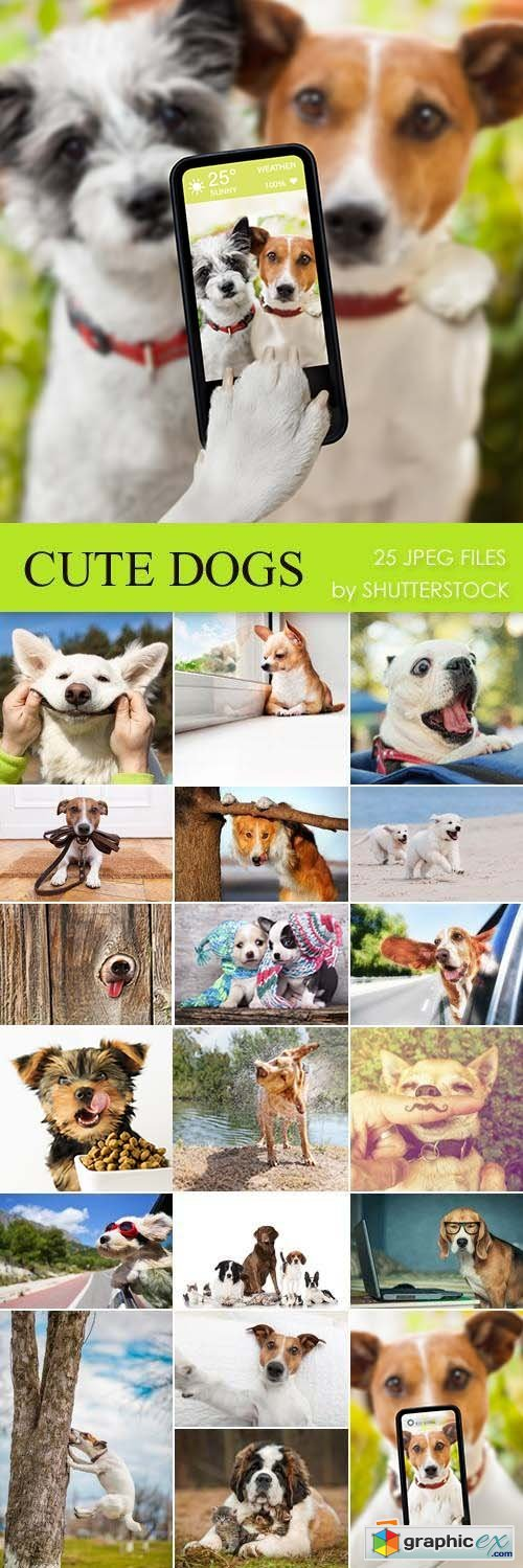 Stock Photo - Cute Dogs
