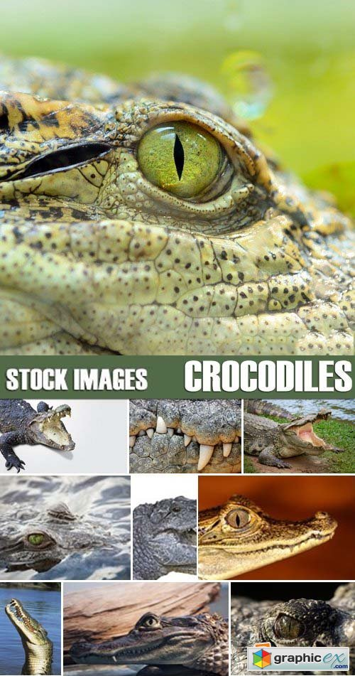 Stock Photos - Crocodiles, 25xJPG