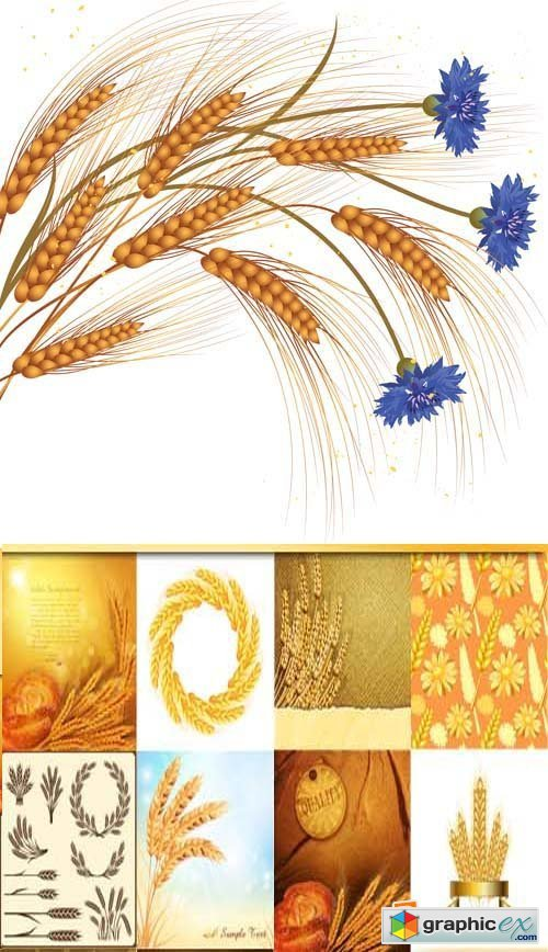 Ears of Wheat Illustration 25xEPS