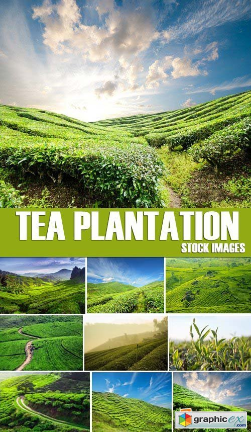 Stock Photos - Tea plantation, 25xJPG