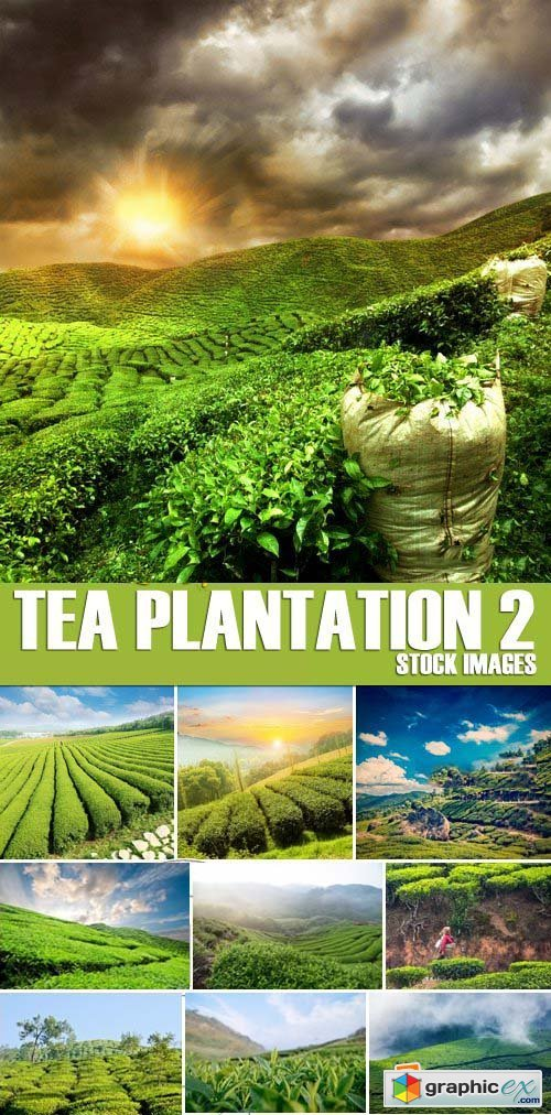 Stock Photos - Tea plantation 2, 25xJPG