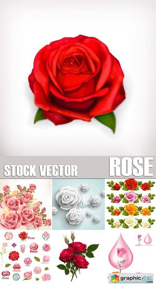 Stock Vectors - Rose, floral background, 25xEPS