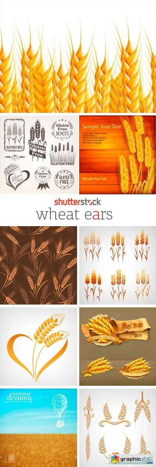 Amazing SS - Wheat Ears, 25xEPS