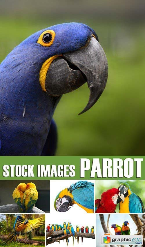Stock Photos - Parrot, 25xJPG