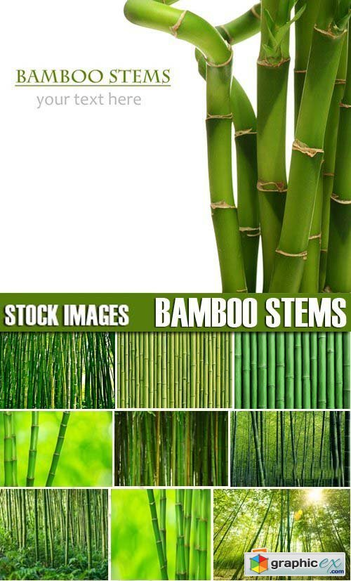 Stock Photos - Bamboo Stems, 25xJPG