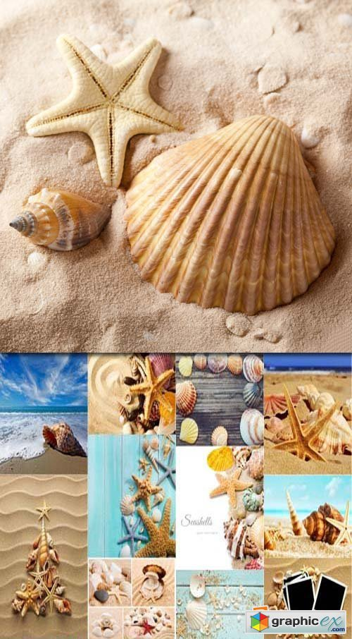 Collage of summer seashells, 25xJPG