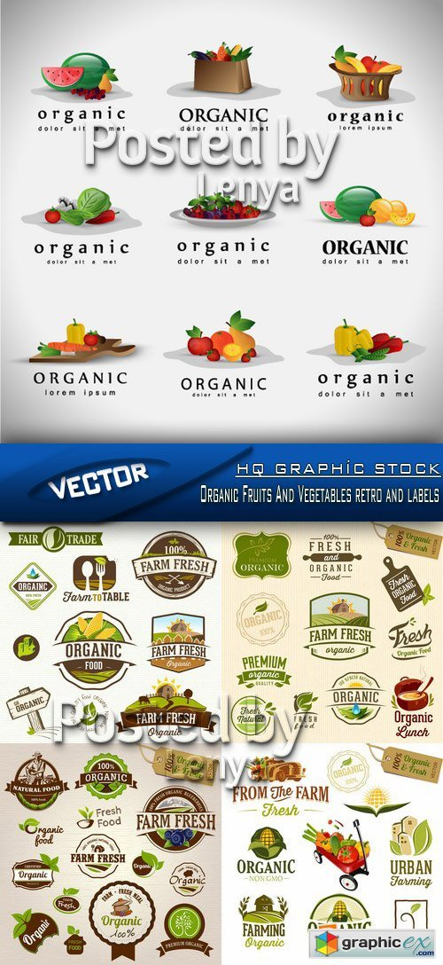 Stock Vector - Organic Fruits And Vegetables retro and labels