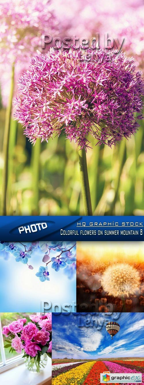Stock Photo - Colorful flowers on summer mountain 8