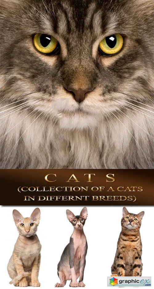 Cats (Collection of a cats in different breeds) 57xJPGs