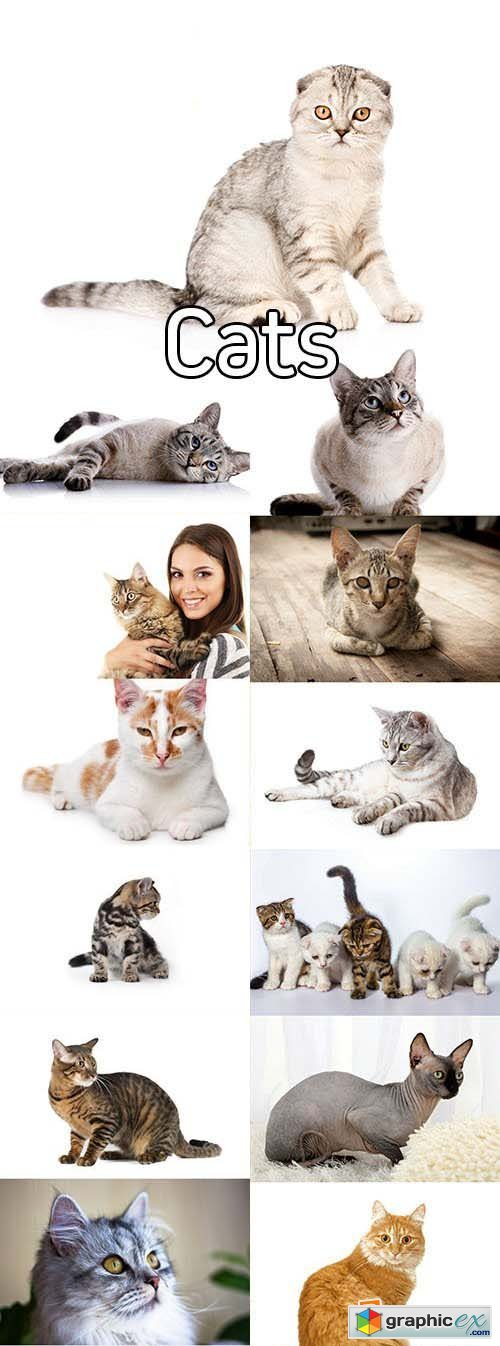 Stock Photos - Cats