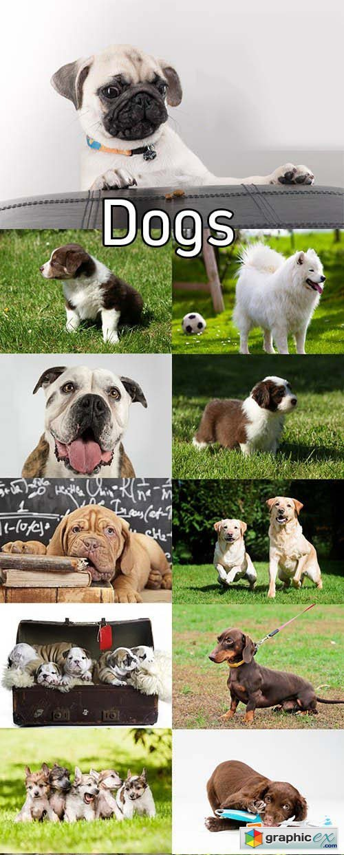 Stock Photos - Dogs