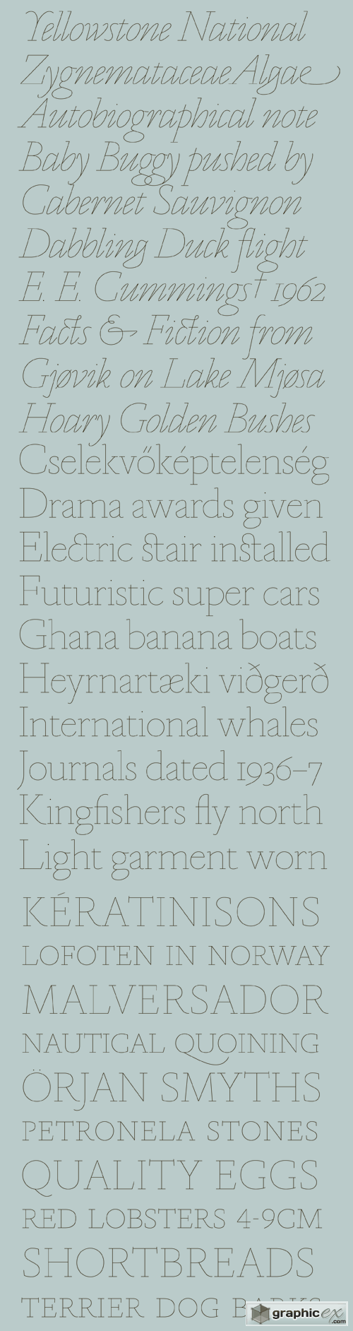Marian Font Family - 18 Fonts for $600