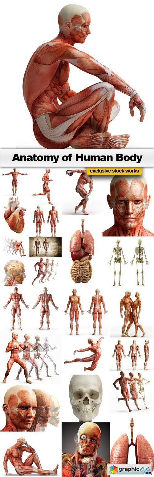 Anatomy of Human Body - 25x JPEGs
