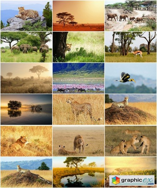 Collection of African nature forest swamp sea sunset elephant lion leopard 25 HQ Jpeg