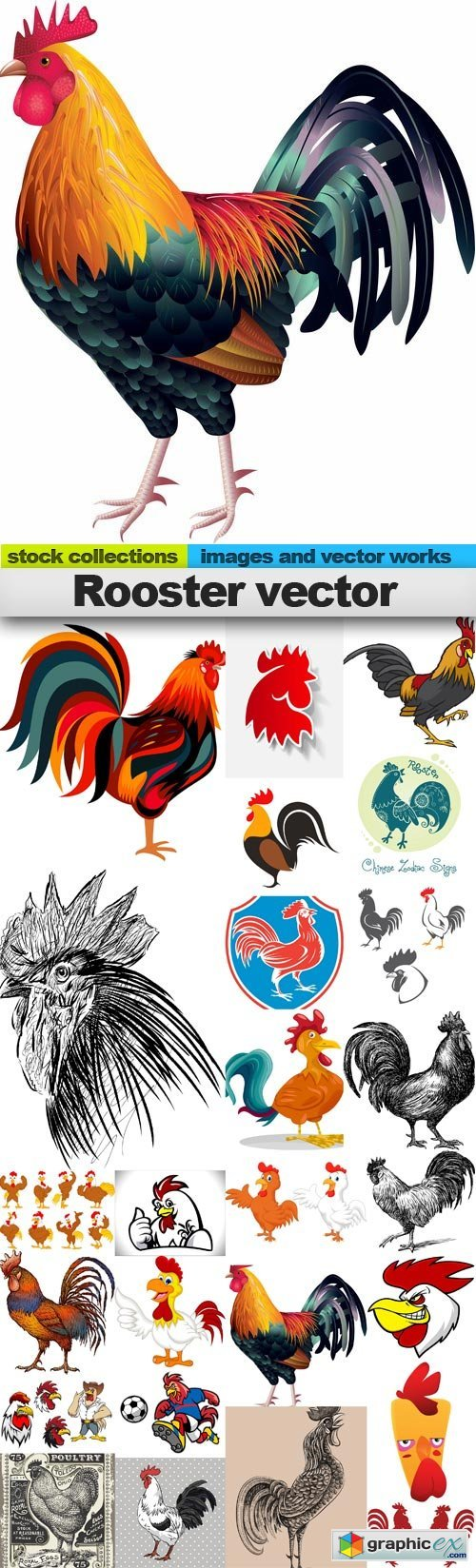 Rooster vector,25 x EPS