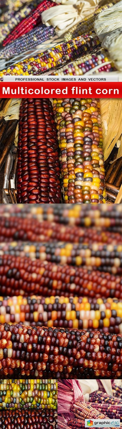 Multicolored flint corn - 5 UHQ JPEG