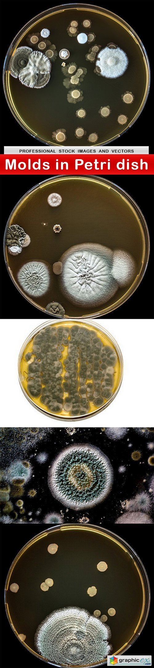 Molds in Petri dish - 5 UHQ JPEG