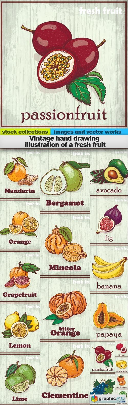 Vintage hand drawing illustration of a fresh fruit, 19 x EPS