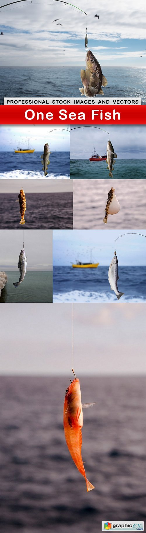 One Sea Fish - 8 UHQ JPEG