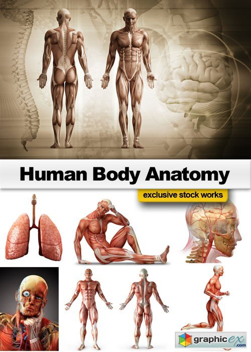 Human Body Anatomy 25xJPG
