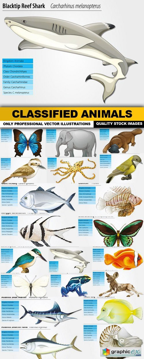 Classified Animals - 20 Vector