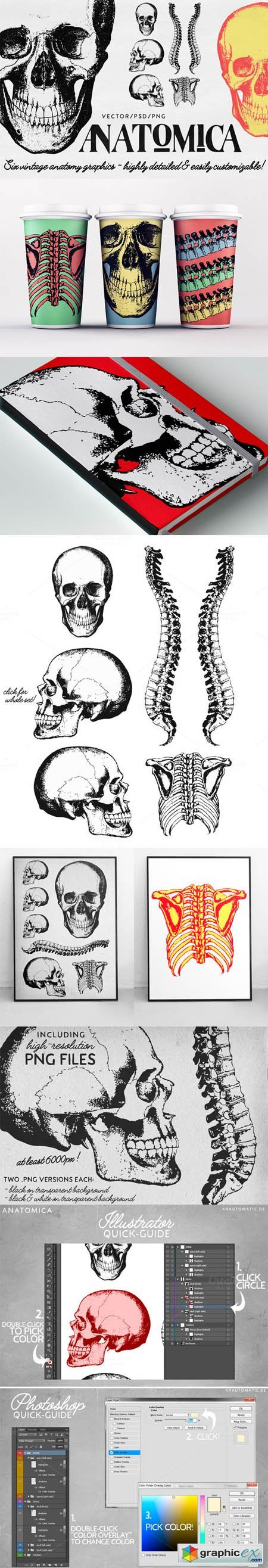 ANATOMICA - vector/psd graphics pack » Free Download Vector
