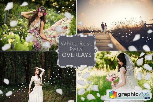White Rose Petal Overlays