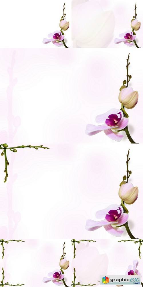Orchid Background on Stem Backdrop