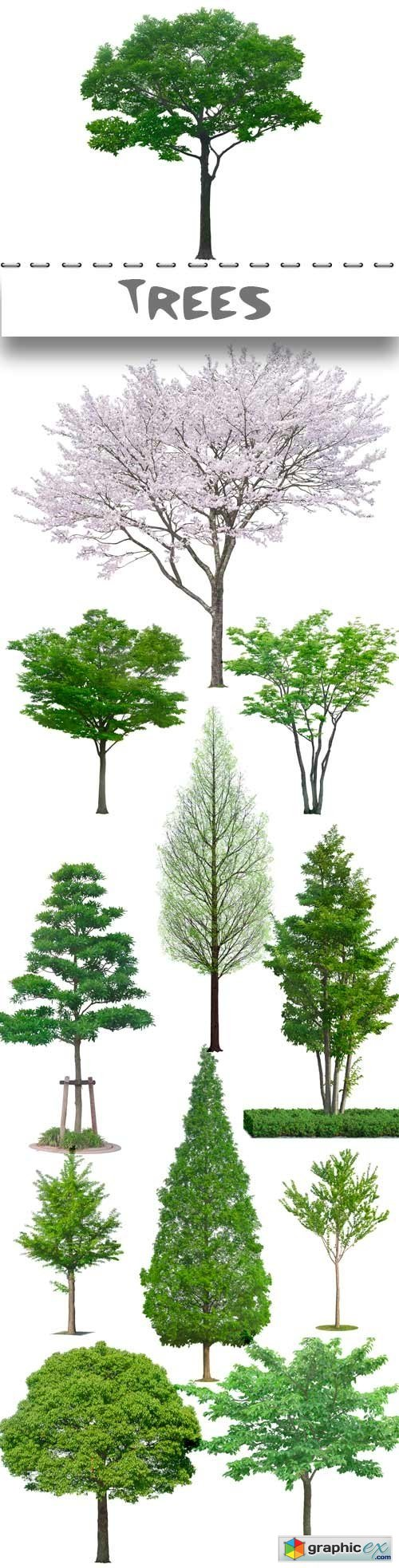 Clipart on a transparent background trees in PSD