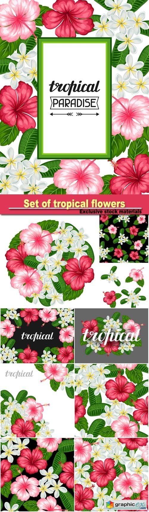 Set of tropical flowers hibiscus and plumeria