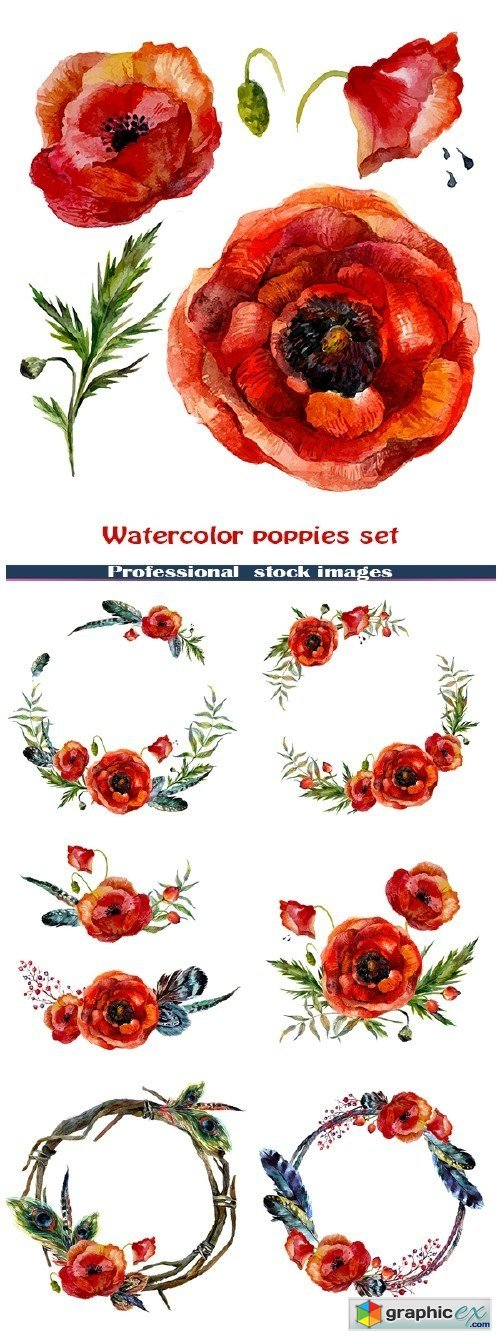 Watercolor poppies set