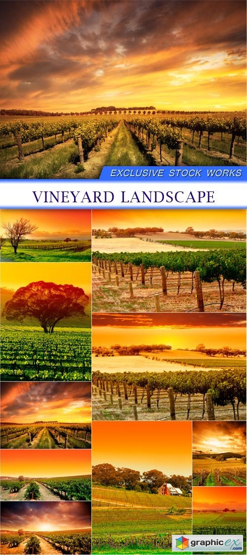 vineyard landscape 10X JPEG