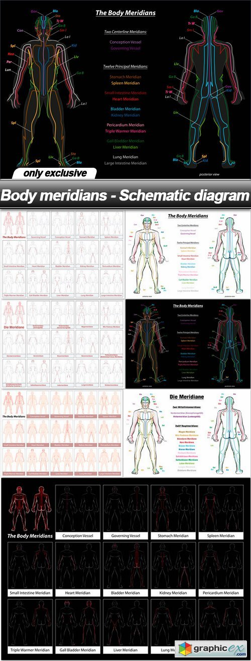 Body meridians - Schematic diagram - 7 EPS