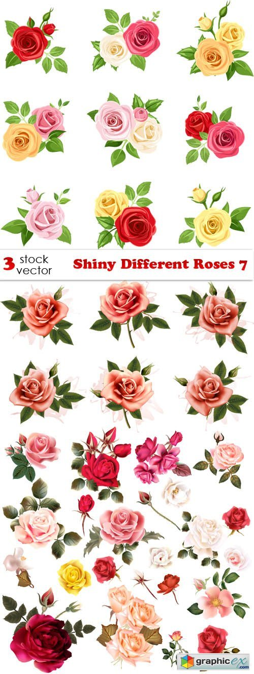 Shiny Different Roses 7