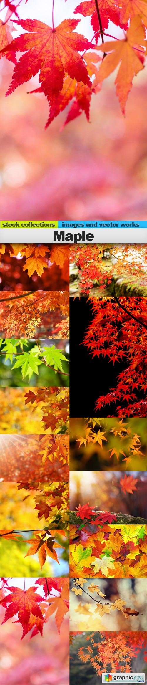 Maple, 15 x UHQ JPEG